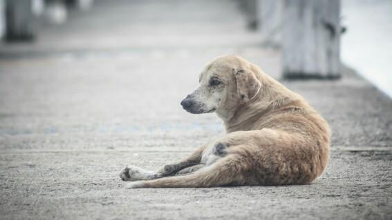 perros amarrados en la azotea prohibiran tener perros amarrados en coahuilas perros maltratados perros que solo estan en azotea o terrenos bal