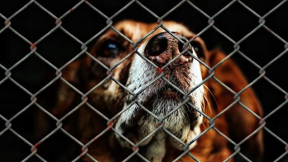 proponen hasta seis anos de carcel y sanciones economicas por abandono y maltrato animal