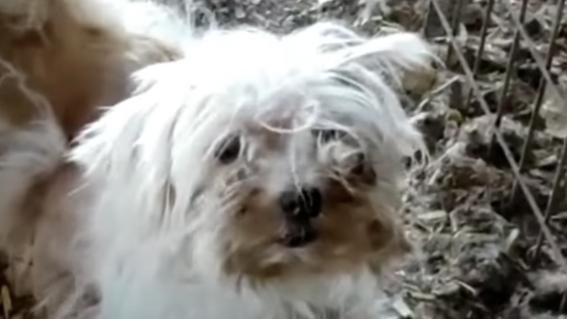 detienen hombre cortar cuerdas vocales perros