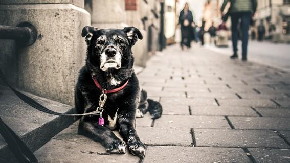 lanzan iniciativa para prohibir tatuajes y piercings en mascotas