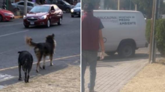 perros canibales naucalpan edomex