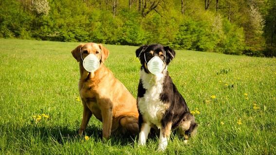 mascotas no transmiten covid19 a humanos salud