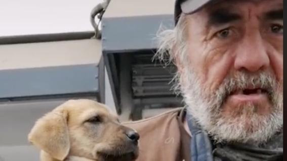 roban perra a abuelo situacion calle don manuel