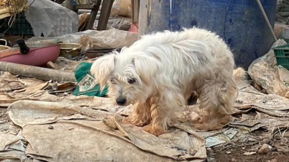perros canibales corea del sur