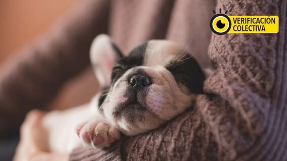 proteger mascota contagio covid