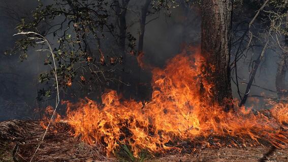 podrian tardarse un mes para controlar el incendio en coahuila y nuevo leon