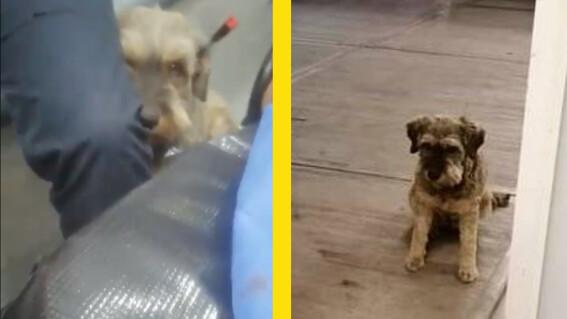 perrito persigue ambulancia que llevaba a su dueno y paramedicos lo dejan subir