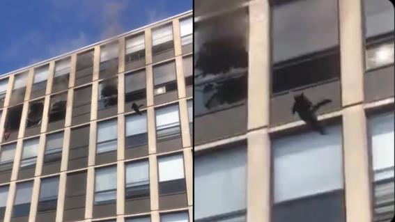 video gato se lanza desde quinto piso de edificio incendio