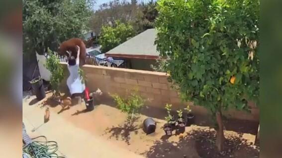 video oso perros california