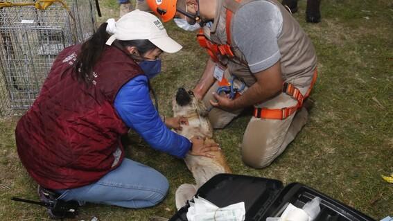 rescatan perros socavon puebla