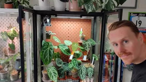 coleccion plantas 10 mil libras