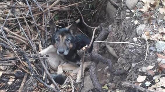 perro enterrado vivo argentina jujuy