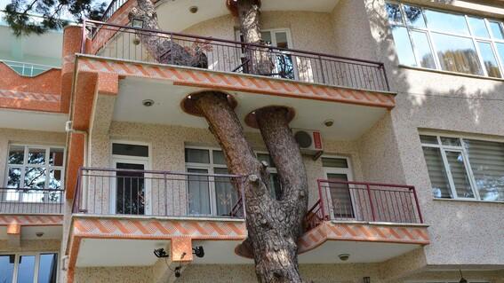 arbol 330 anos edificio turquia