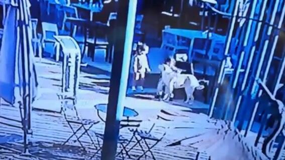 nino perro padre centro comercial gringo