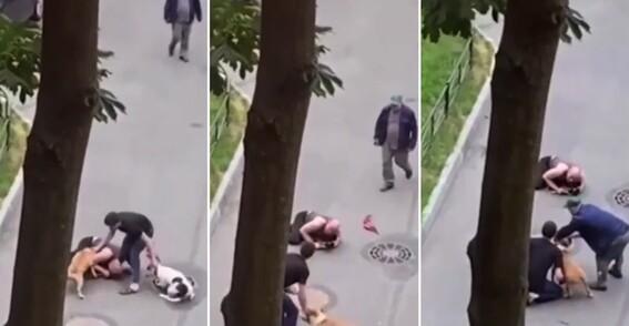 hombre vida proteger mascota ataque perros