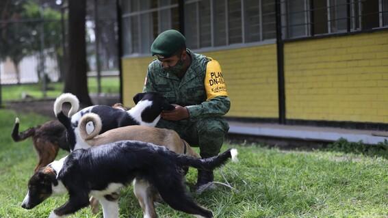 refugio soldados perros callejeros santa lucia perritos