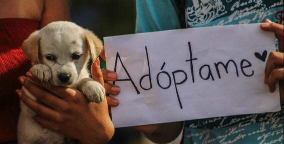 lugares adoptar perros ciudad de mexico perritos