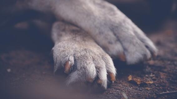 perro asesinado tlalnepantla fecha y hora marcha exigir justicia