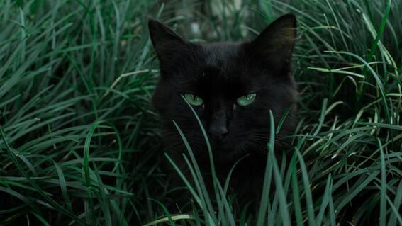 steve bouquet condenan prision asesino serial gatos