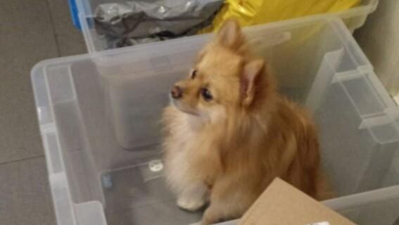 perro perdido objetos perdidos