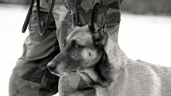 afganistan perros abandonados kabul