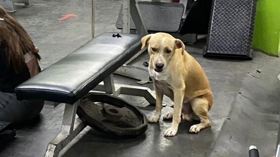 perro en el gym