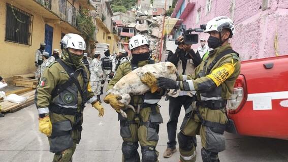 rescatan perro cerro del chiquihuite