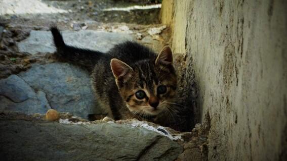 ¿como puedo recuperar a mi gatito si se perdio